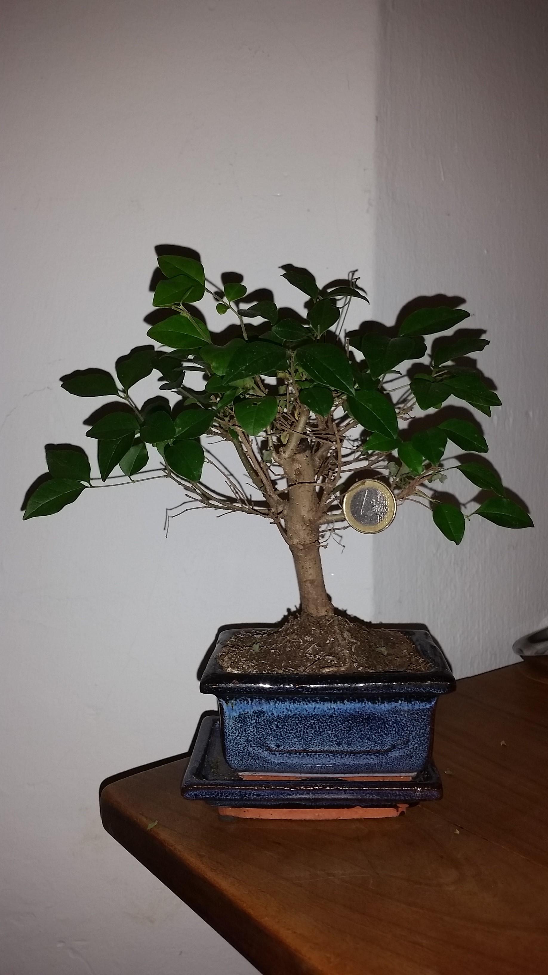 Geld wächst nicht auf Bäumen...